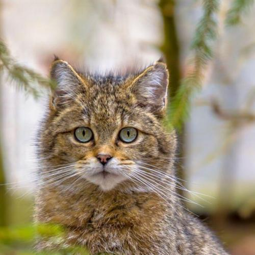 ORIGINS AND HISTORY OF CATS