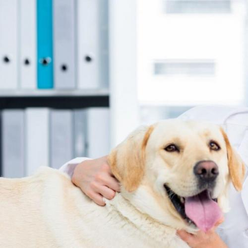 Your dog's pregnancy and delivery