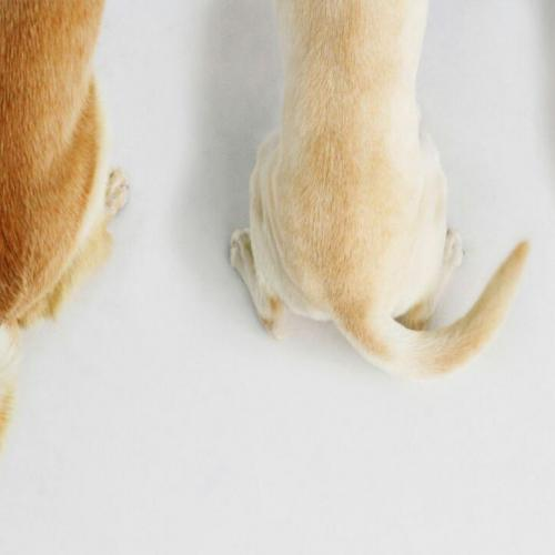 The tail, an effective health indicator