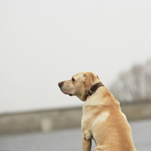 What should you do if your dog gets lost?