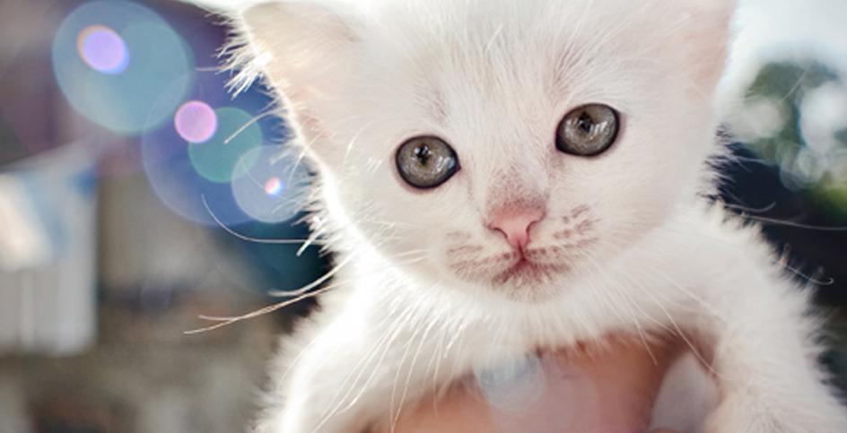 Adopta un gato, dale un hogar