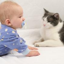 El gat i la