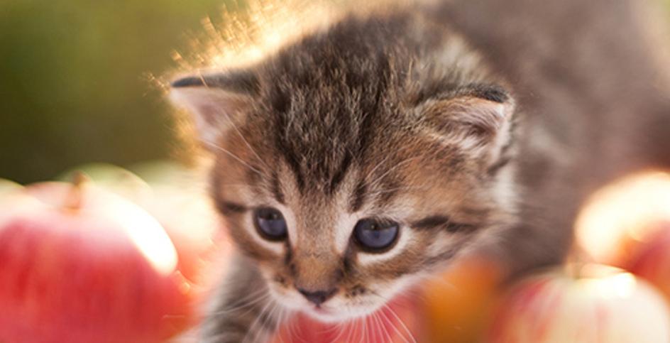 Jeux pour chats, bien plus que de l'amusement