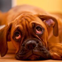 El gos i els càstigs sense cap sentit