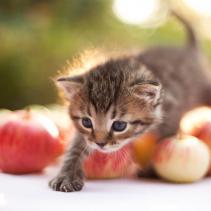 Feline games: much more than fun