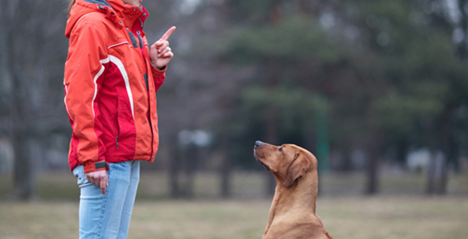Basic commands to have a well-trained dog