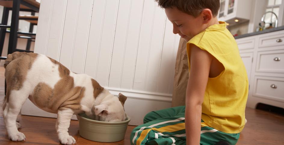 Por qué razón se adopta un perro