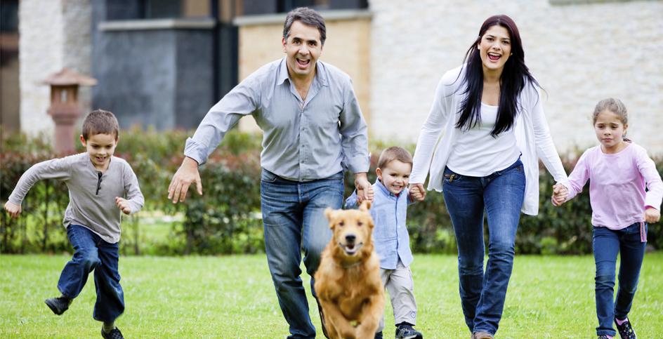Está pronto para adotar um animal de estimação?