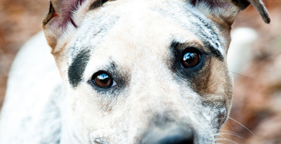 Deixe seu cachorro com um lindo sorriso