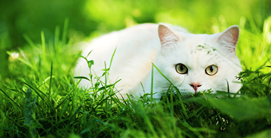 Jeux pour un chat chasseur