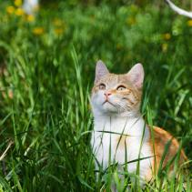 How to prevent your cat from scratching you