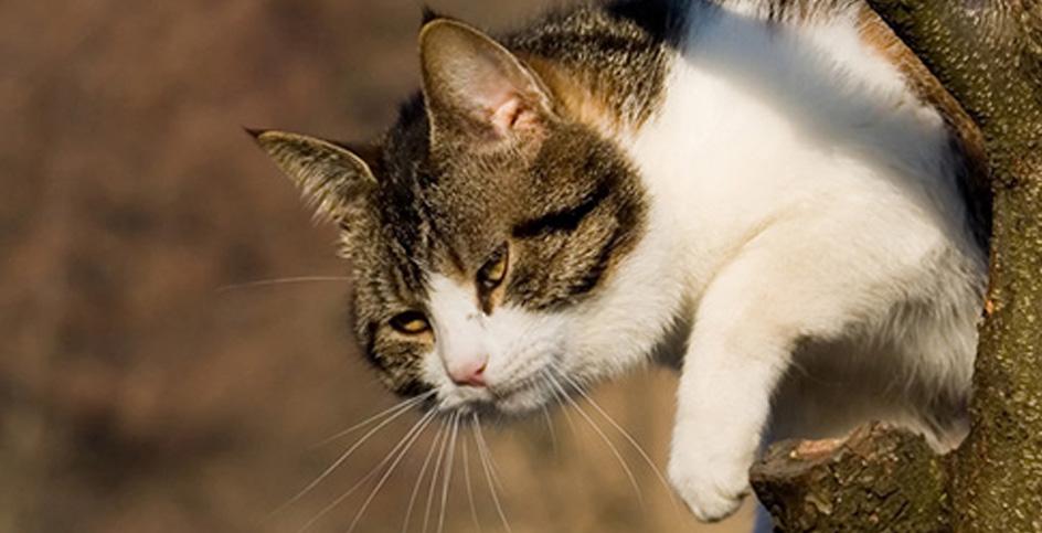 Les chats et les éléments en hauteur