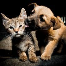 A reprodução do seu animal é da sua responsabilidade