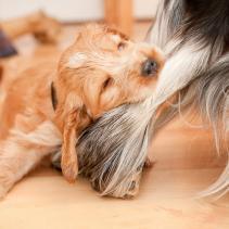 As mordidas dos cachorros: não sem a sua permissão