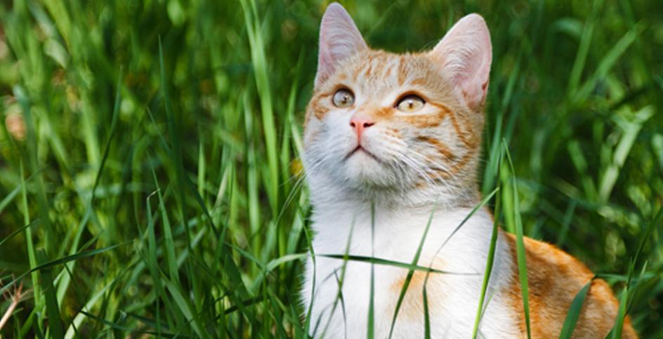 Как избежать кошачьих царапин