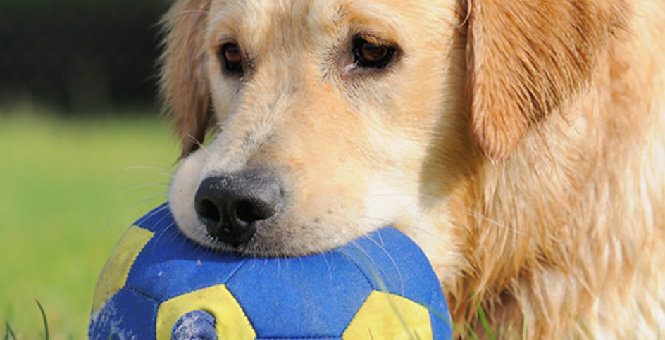 Who says that dogs can distinguish blue from yellow?