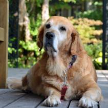 O Alzheimer em cachorros