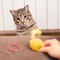 Mi gato me hizo comprender que todos los animales son fascinantes