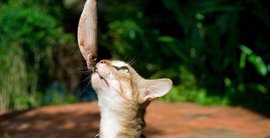 Die Erziehung der Katze ist möglich