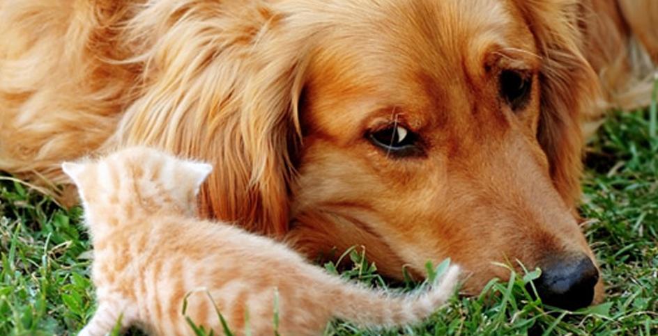 Tudo o que você precisa saber sobre a acupuntura em animais