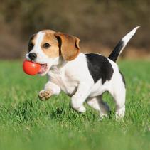 Para os cães, é muito mais do que uma brincadeira