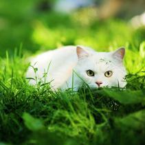 Brincadeiras de um gato caçador