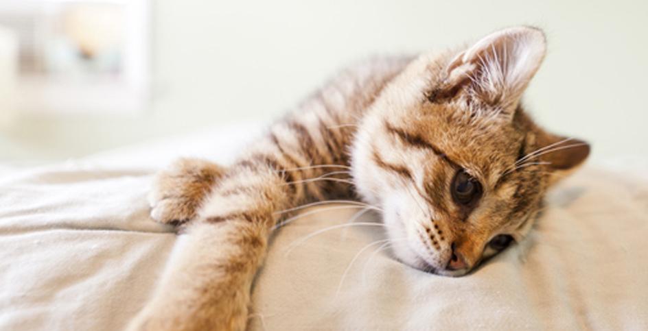 El antes y el después de la castración de tu gato