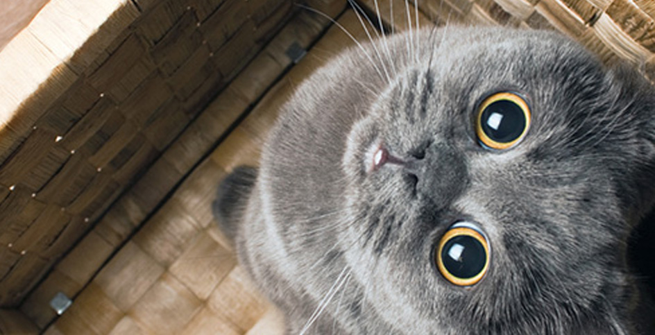 Souhaitons la bienvenue au chaton de la maison!