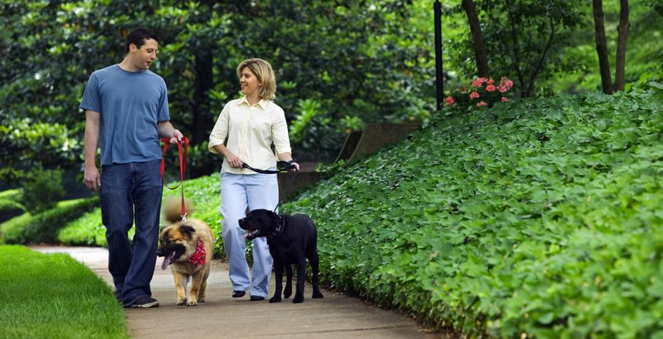Les chiens, «lubrifiants sociaux»