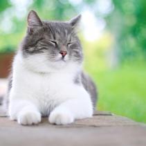 Prima e dopo la sterilizzazione della gattina