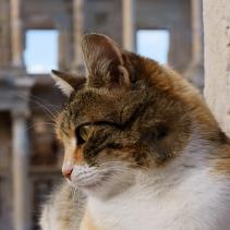 Os gatos na história europeia
