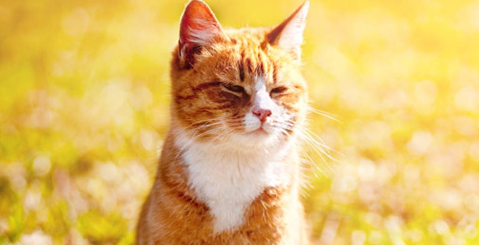 Die Bildung von Harnsteinen bei Katzen