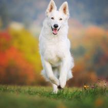 Os cães adoram praticar desporto