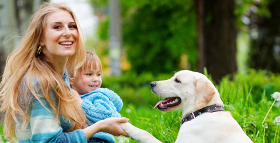 Como cumprimentar um cão desconhecido