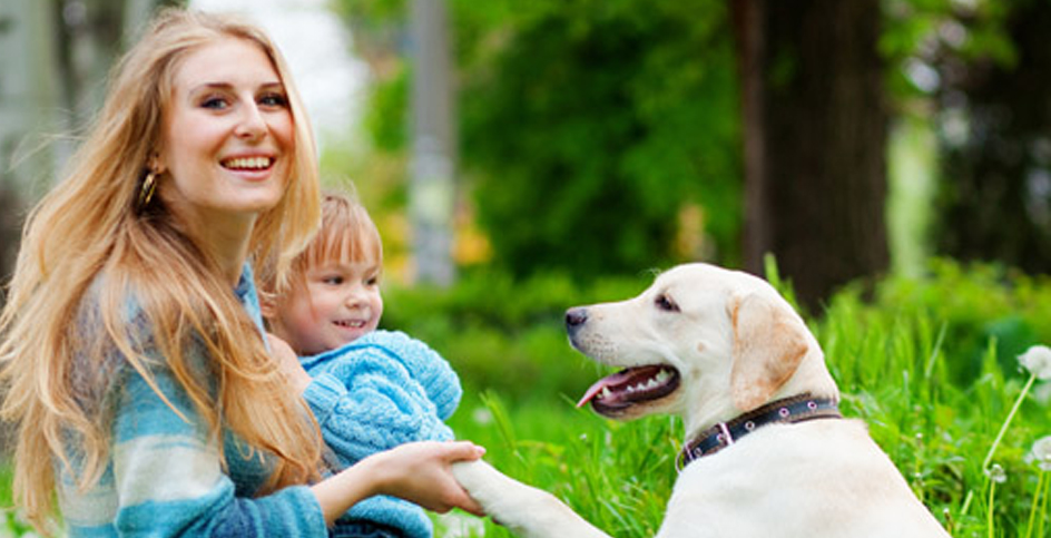 Come salutare un cane sconosciuto