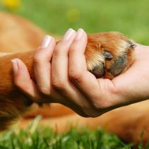 Agopuntura e omeopatia anche per gli animali