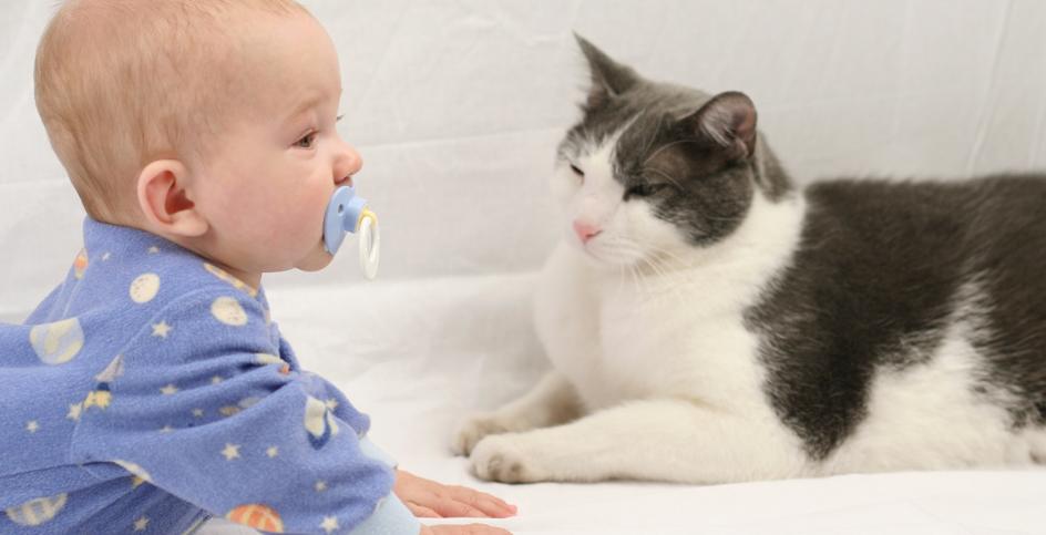 Le chat et la «cigogne»: préparer l'arrivée de bébé