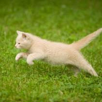 Sterilised cats: It's time to get fit!
