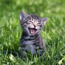 60 verschiedene Bedeutungen für 60 verschiedene Miau-Laute