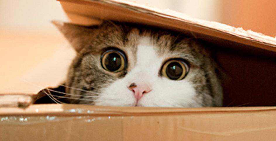 Cães e gatos: sensações da Internet