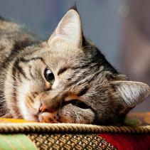Regarding the difficulty of detecting illnesses in cats