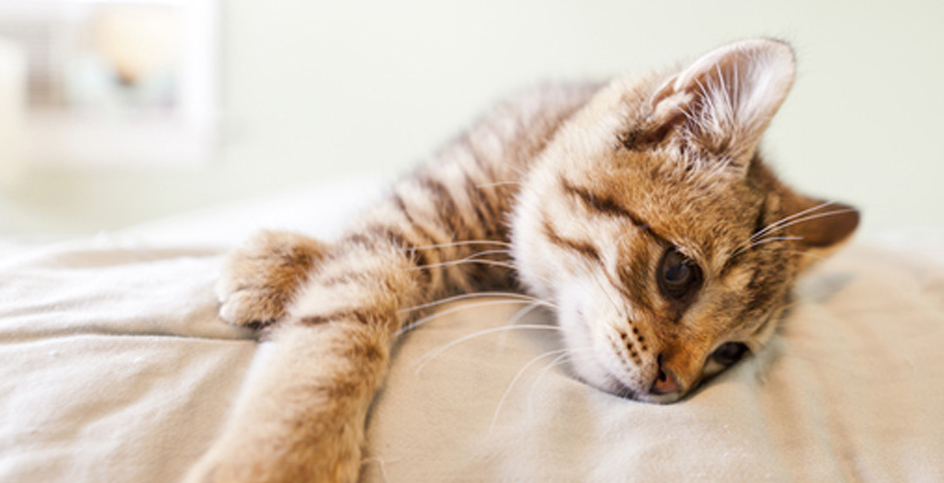 O antes e o depois da castração de seu gato