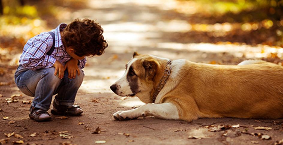 Tiere machen Kinder stark