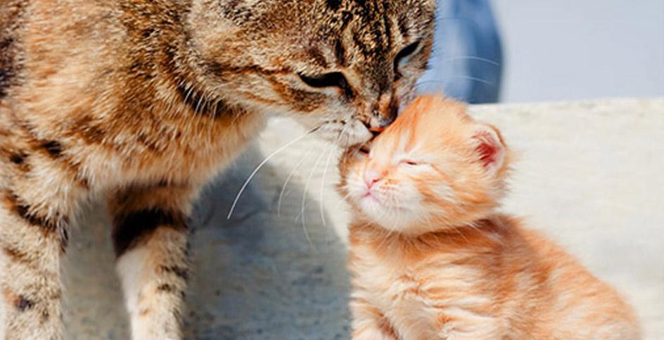 Cuddles, a manner of speaking
