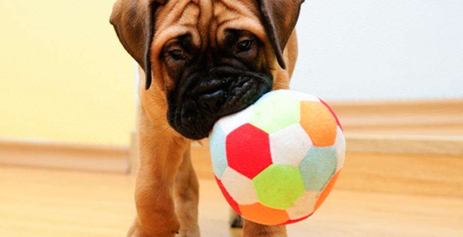 Cachorros, comecem o treino!