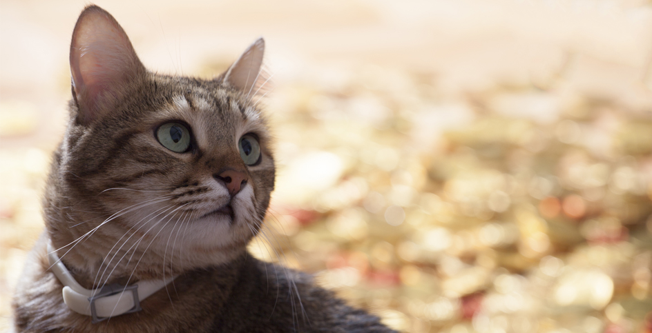 O gato precisa de ir à rua passear?