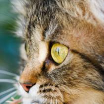 Gatos que buscam a bolinha