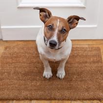 «Юпи! У нас гости!» Излюбленный момент для собак