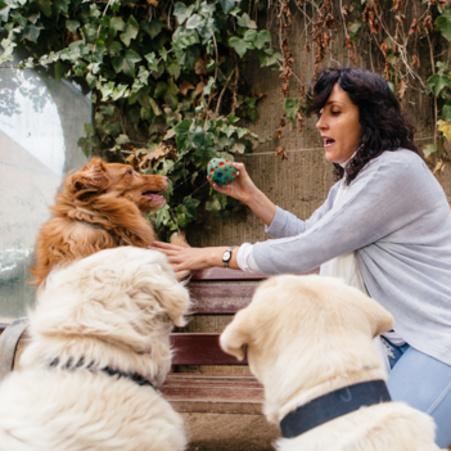 Com pot arribar a ajudar tant el vincle amb un animal?