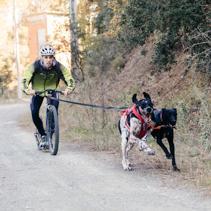 L'skijöring i el bikejöring, una manera d'entendre la vida